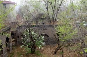 左邊樹葉綠花白,生氣盎然。右邊樹枯枝敗葉,了無生機
